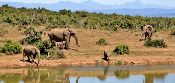 Zahrajte sa na safari